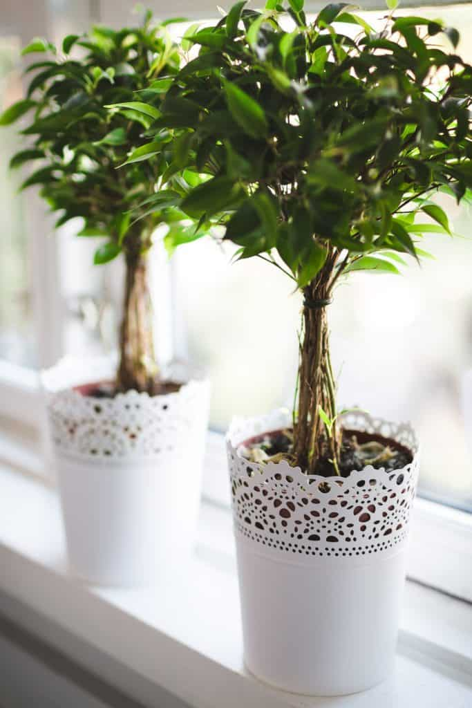 Factors To Consider While Setting Up An Indoor Garden