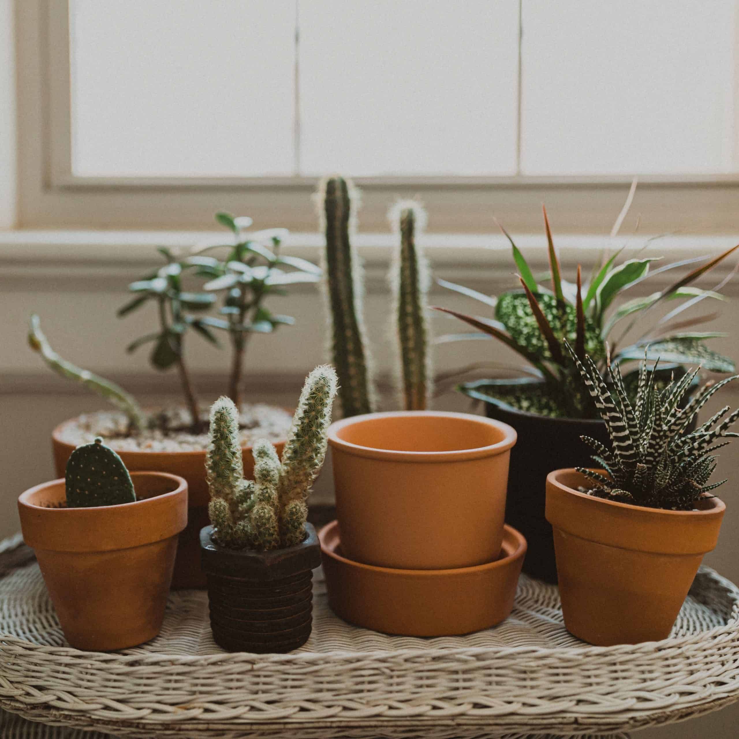 Benefits Of Gardening Containers