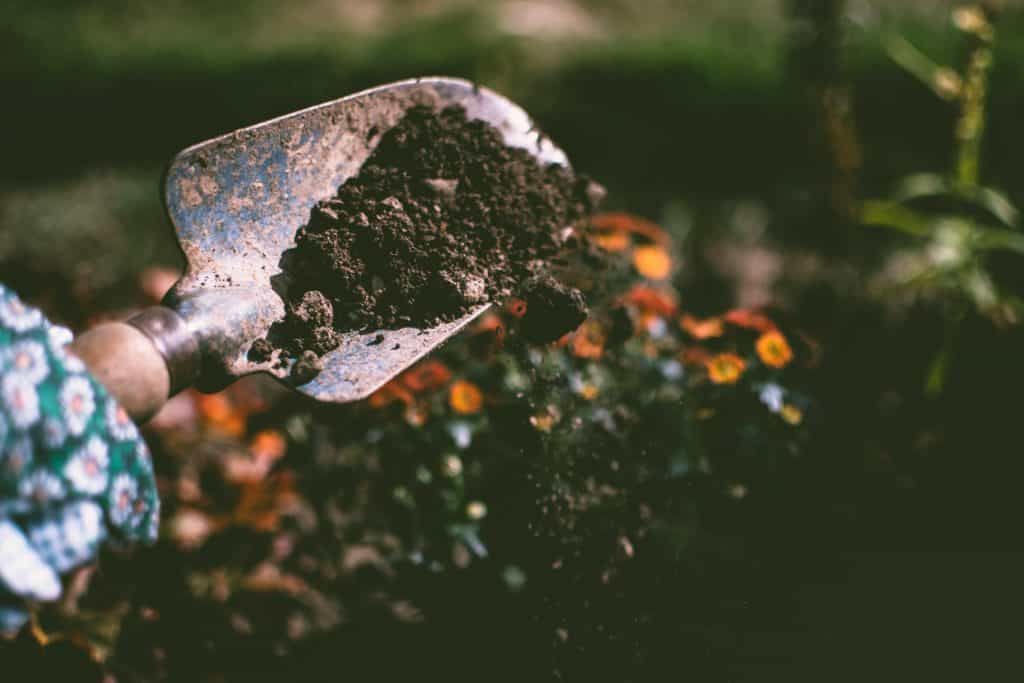 Shovel vs. Spade: Everything You Need To Know