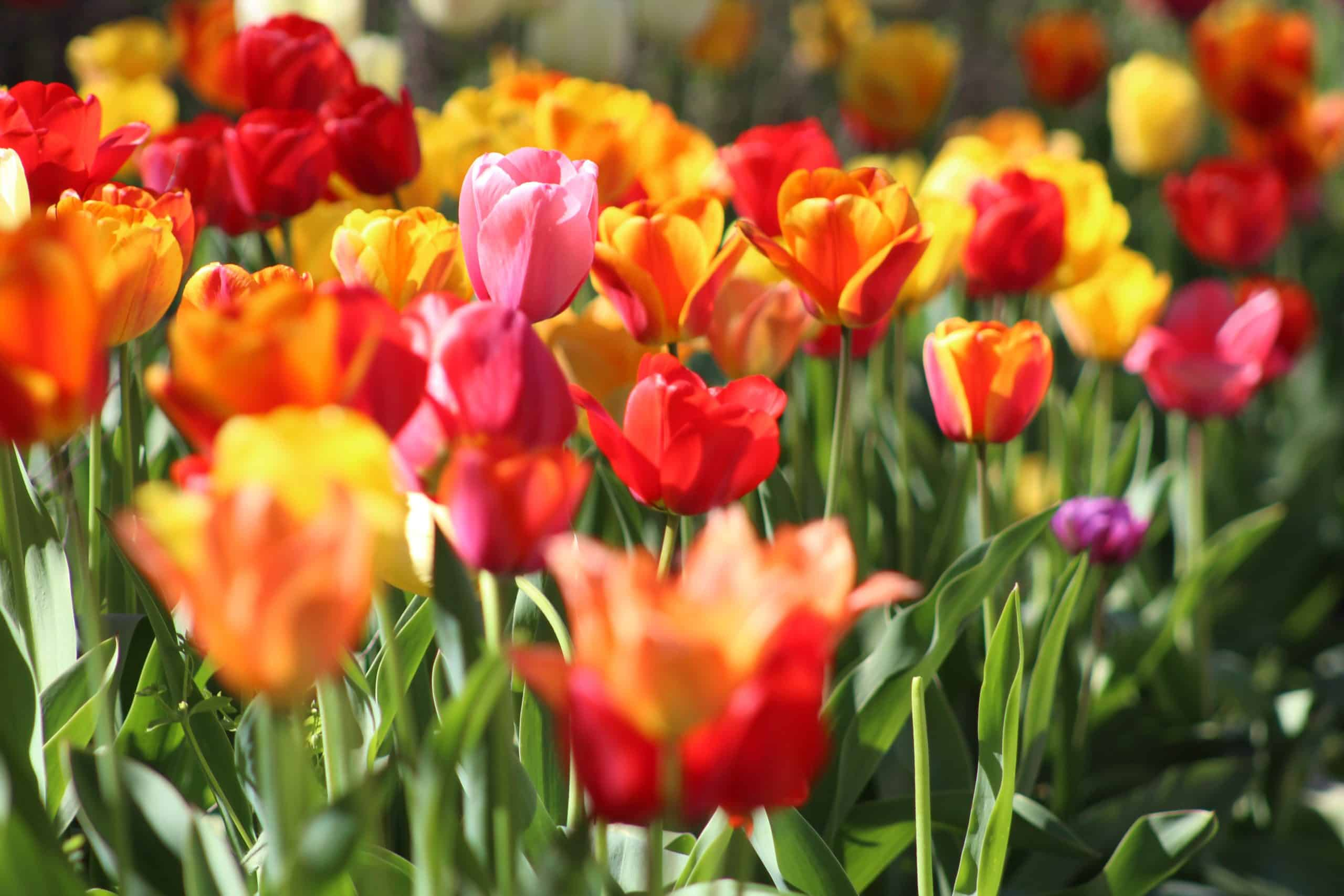 Planning For Your Gardening Project - Follow These Tips