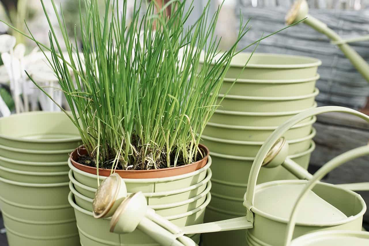 Here Are Some Things You Need To Know About Potted Plants